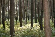 bottrop+naturschutzgebiet-kirchheller-heide+bild01.jpg