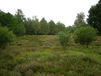 dorsten+naturschutzgebiet-ruetterberg-nord+bild01.jpg