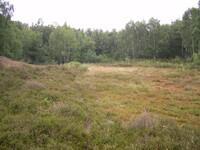 dorsten+naturschutzgebiet-ruetterberg-nord+bild02.jpg
