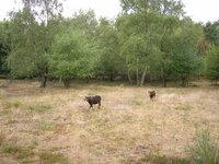 dorsten+naturschutzgebiet-ruetterberg-nord+bild03.jpg