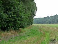 dorsten+naturschutzgebiet-wessendorfer-elven+bild02.jpg