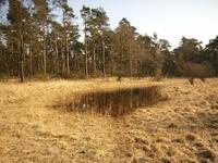 dorsten+naturschutzgebiet-witteberge+bild01.jpg