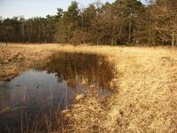 dorsten+naturschutzgebiet-witteberge+bild02.jpg