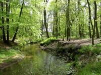 dorsten+naturschutzgebiet-witteberge+bild03.jpg