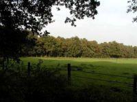 dorsten+wichernwald+bild03.jpg